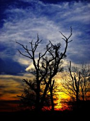 Sunset in the graveyard of trees - by Tony Karp