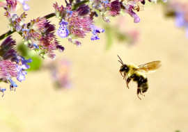 Impressionist Bees by Tony Karp