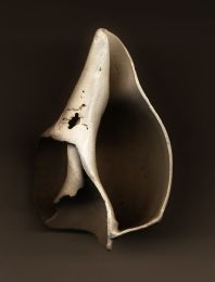 Georgia O Keeffe broken shell -Sara D. November Gallery exhibit  - by Tony Karp